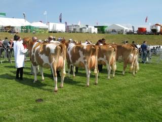 Heifer In Milk Class