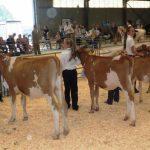 Calves born Jan-Jun 13